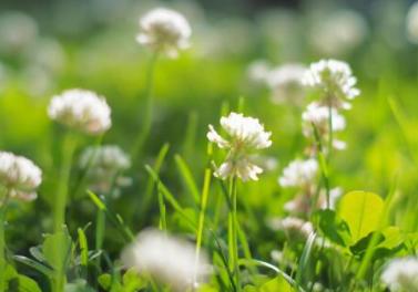 花粉が飛ぶ